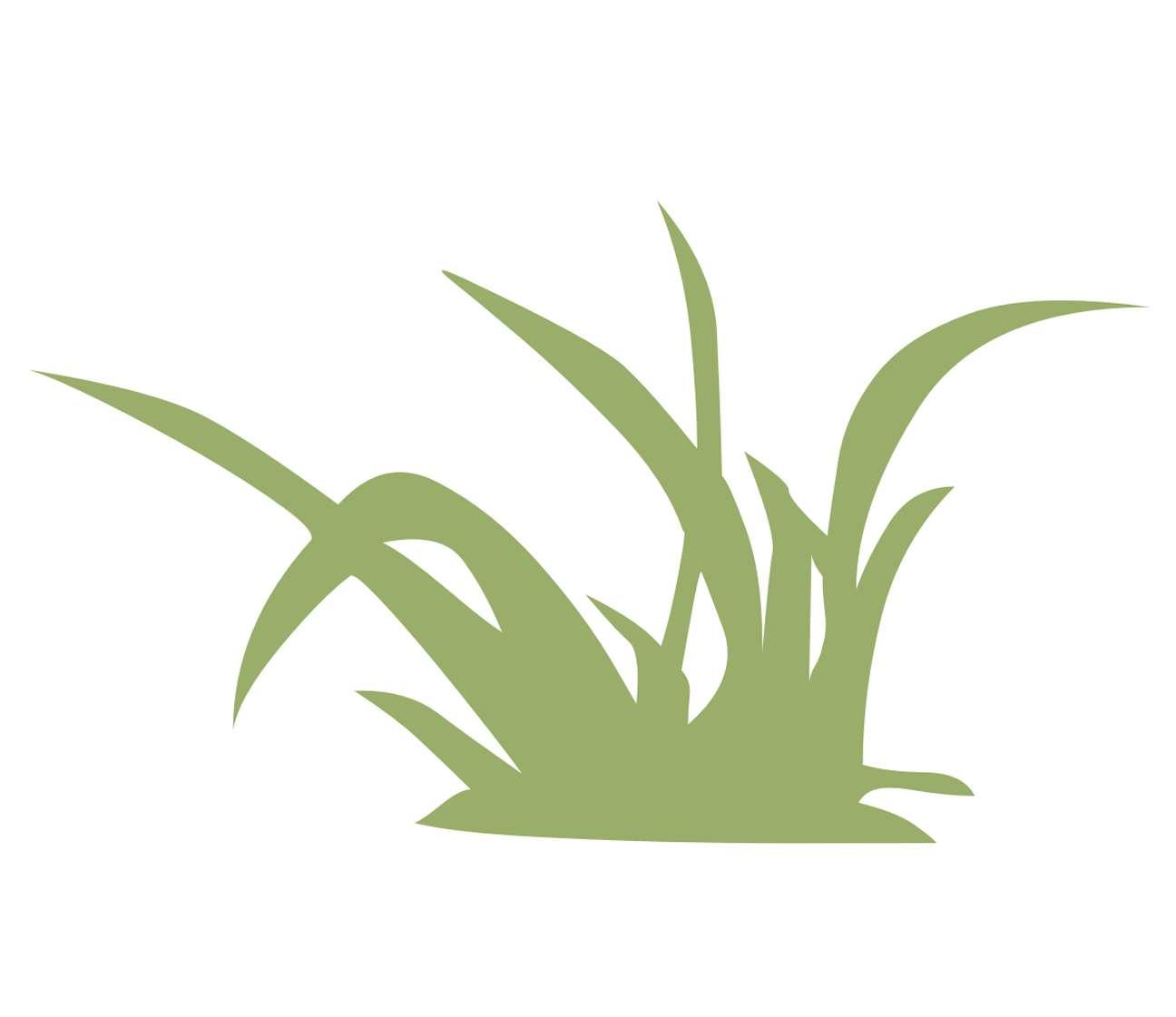 Picturesque Wandtattoo Wiese The Best Of Pflanzen Gras Grashalme Wandtattoo-wandbild-wandfoto-guenstig-billig-gute-wall-art-folie-im-shop-kaufen | Wegaswerbung Shop